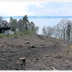 Bäume gefällt – Kommt ein Hubschrauber-Landeplatz?